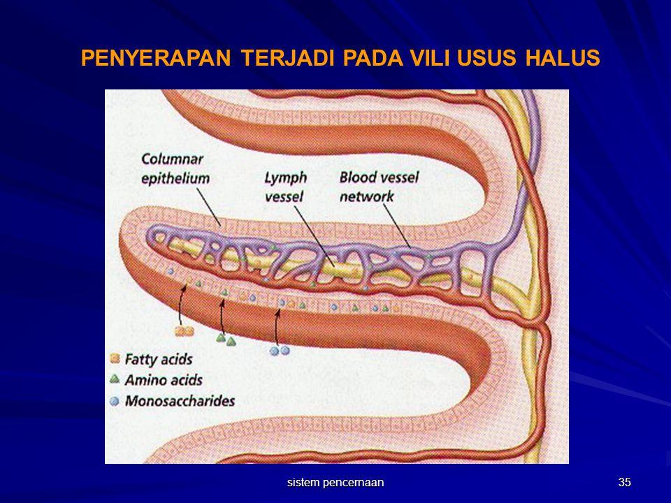 PENYERAPAN TERJADI PADA VILI USUS HALUS 35 sistem pencernaan