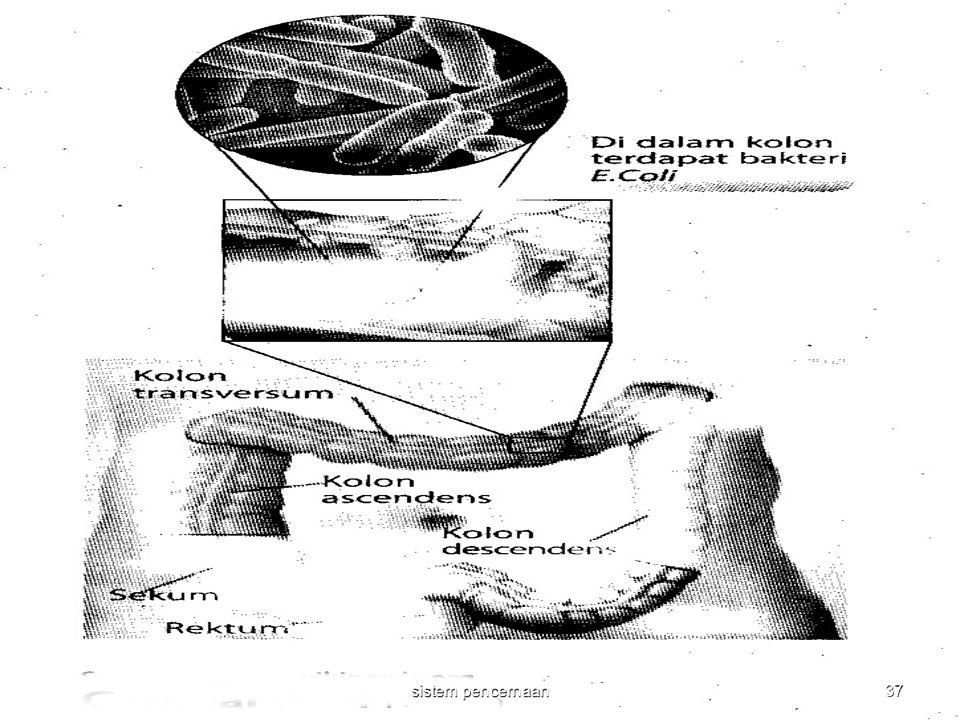 37 sistem pencernaan