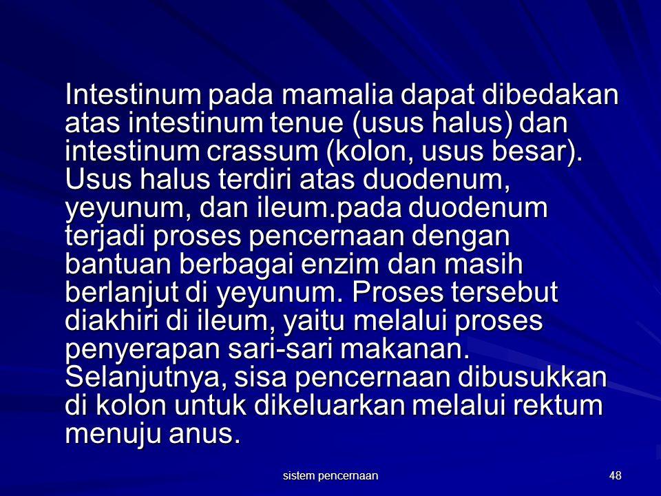 Intestinum pada mamalia dapat dibedakan atas intestinum tenue (usus halus) dan intestinum crassum (kolon, usus besar). Usus halus terdiri atas duodenu