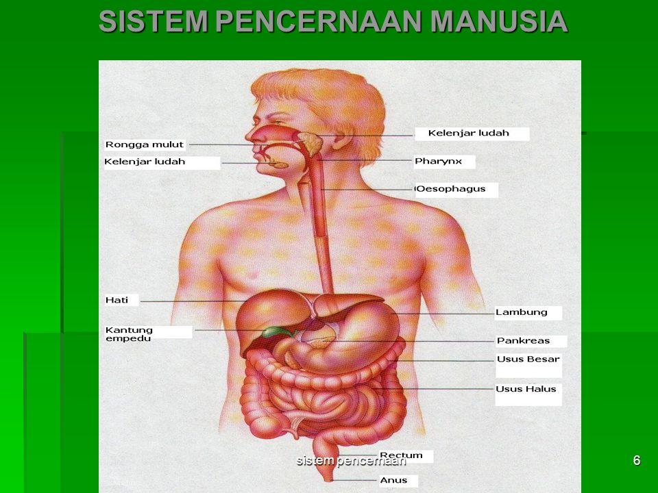Getah Lambung - air LAMBUNG : - lendir - asam lambung (HCl) Enzim Renin : Menggumpalkan protein susu Pepsinogen : Pepsin: HCl Protein pepton sistem pencernaan 17