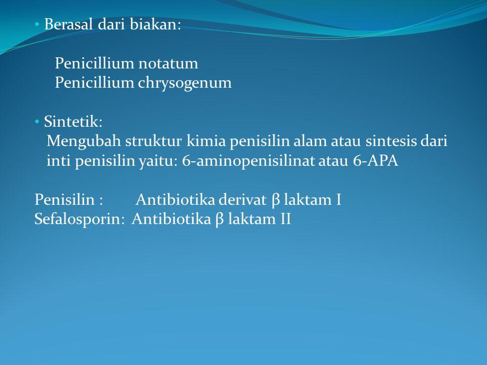 Berasal dari biakan: Penicillium notatum Penicillium chrysogenum Sintetik: Mengubah struktur kimia penisilin alam atau sintesis dari inti penisilin ya