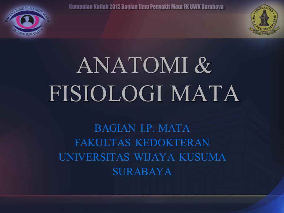 ANATOMI & FISIOLOGI MATA BAGIAN I.P. MATA FAKULTAS KEDOKTERAN UNIVERSITAS WIJAYA KUSUMA SURABAYA