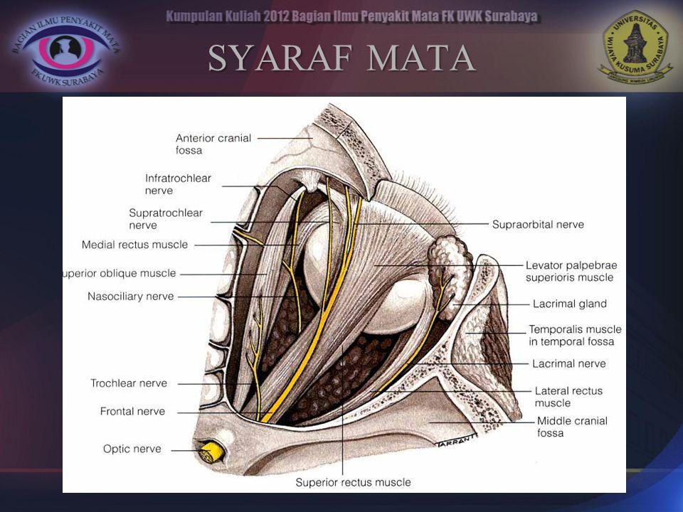 SYARAF MATA