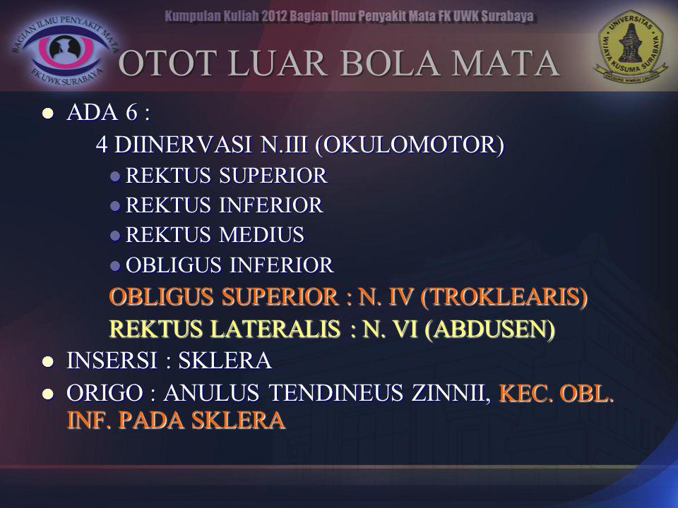 OTOT LUAR BOLA MATA ADA 6 : ADA 6 : 4 DIINERVASI N.III (OKULOMOTOR) REKTUS SUPERIOR REKTUS SUPERIOR REKTUS INFERIOR REKTUS INFERIOR REKTUS MEDIUS REKT