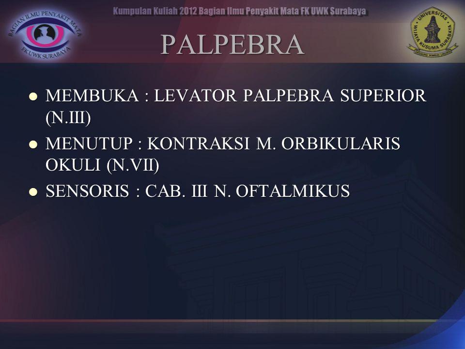 PALPEBRA MEMBUKA : LEVATOR PALPEBRA SUPERIOR (N.III) MEMBUKA : LEVATOR PALPEBRA SUPERIOR (N.III) MENUTUP : KONTRAKSI M. ORBIKULARIS OKULI (N.VII) MENU