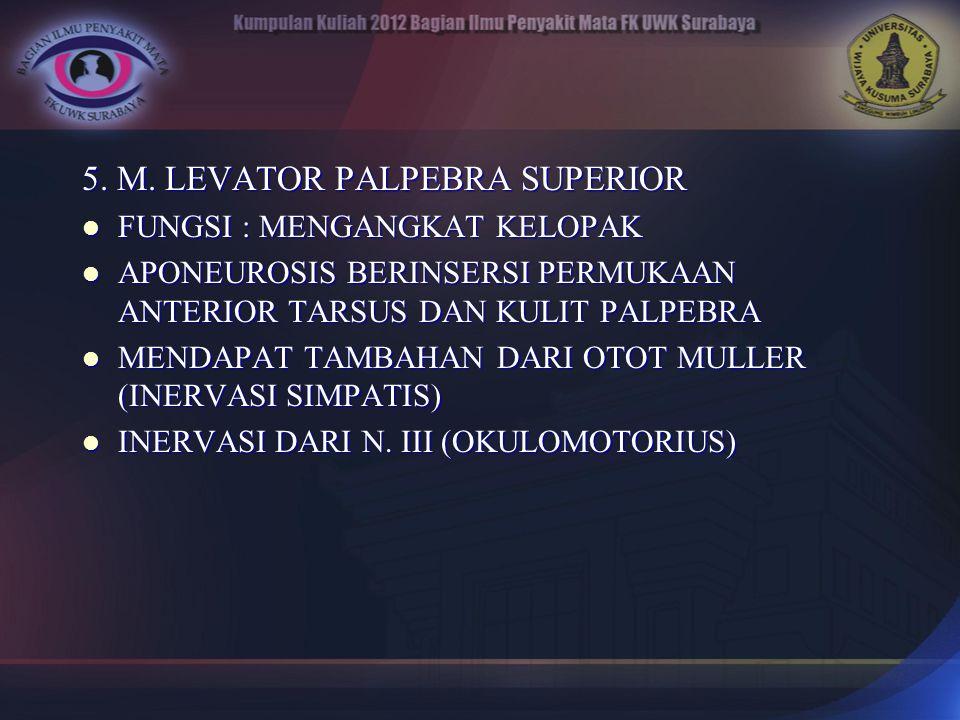 5. M. LEVATOR PALPEBRA SUPERIOR FUNGSI : MENGANGKAT KELOPAK FUNGSI : MENGANGKAT KELOPAK APONEUROSIS BERINSERSI PERMUKAAN ANTERIOR TARSUS DAN KULIT PAL