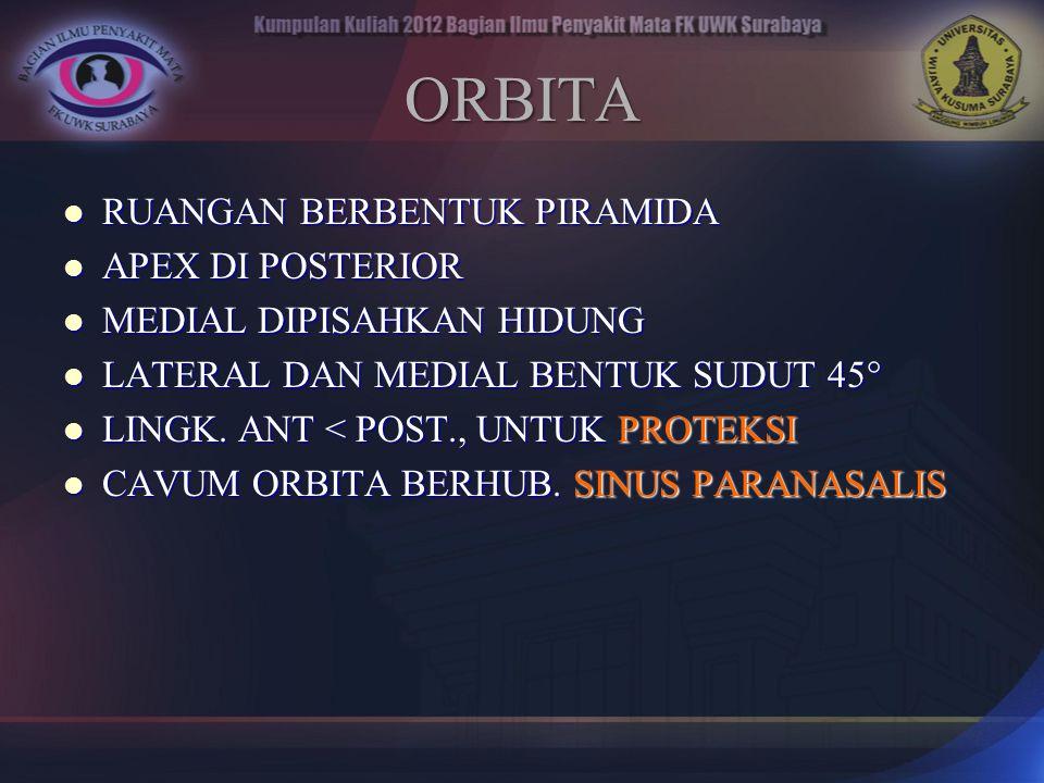 ORBITA RUANGAN BERBENTUK PIRAMIDA RUANGAN BERBENTUK PIRAMIDA APEX DI POSTERIOR APEX DI POSTERIOR MEDIAL DIPISAHKAN HIDUNG MEDIAL DIPISAHKAN HIDUNG LAT