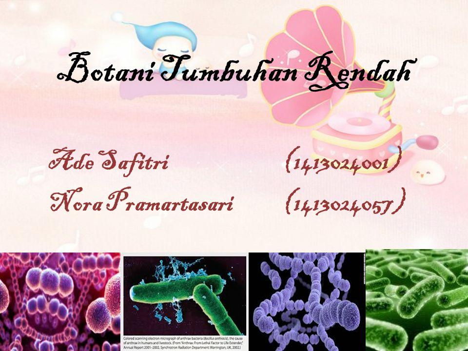 Botani Tumbuhan Rendah Ade Safitri (1413024001) Nora Pramartasari (1413024057)