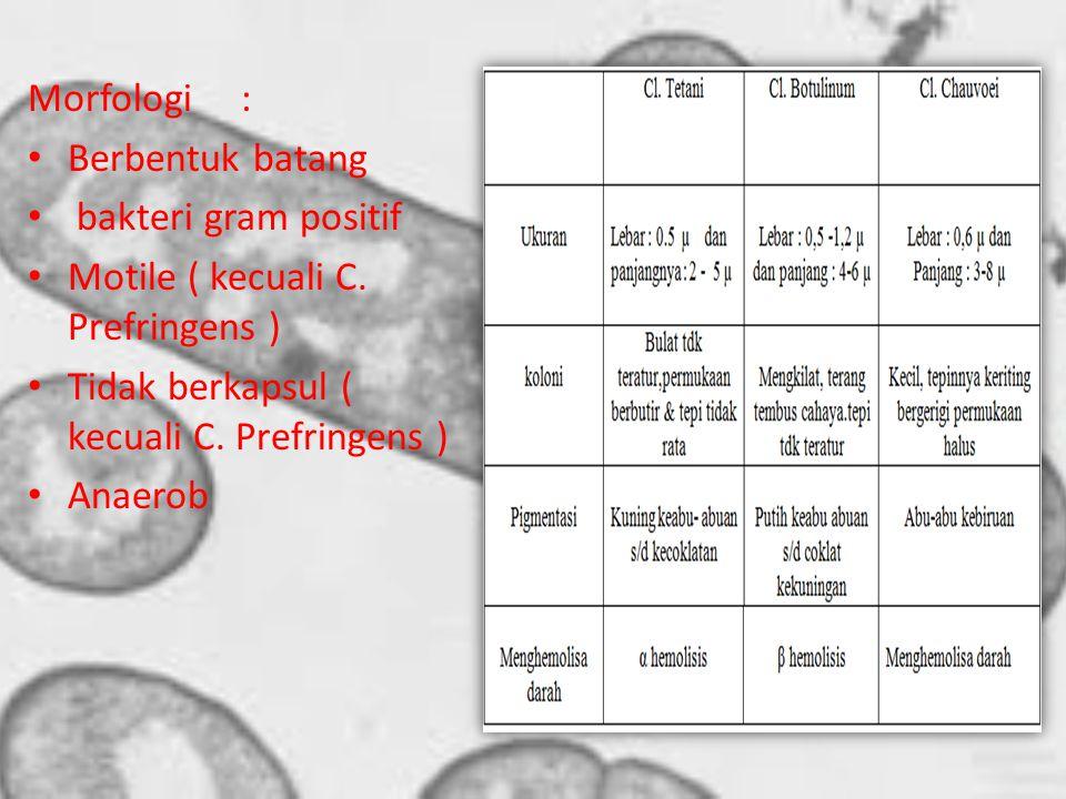 Morfologi: Berbentuk batang bakteri gram positif Motile ( kecuali C.
