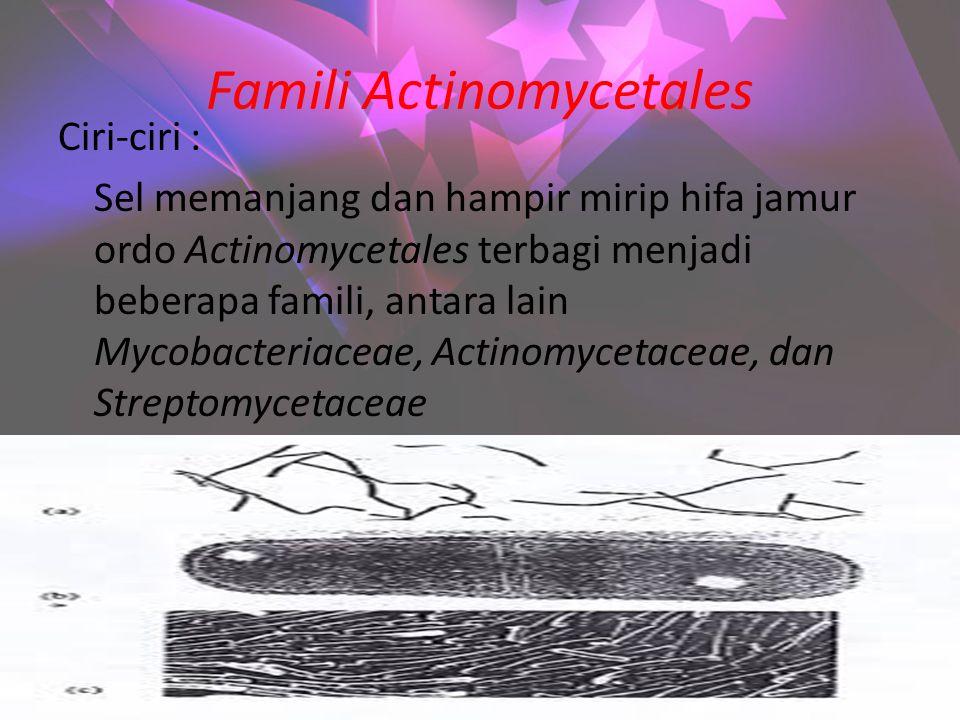 Famili Actinomycetales Ciri-ciri : Sel memanjang dan hampir mirip hifa jamur ordo Actinomycetales terbagi menjadi beberapa famili, antara lain Mycobacteriaceae, Actinomycetaceae, dan Streptomycetaceae