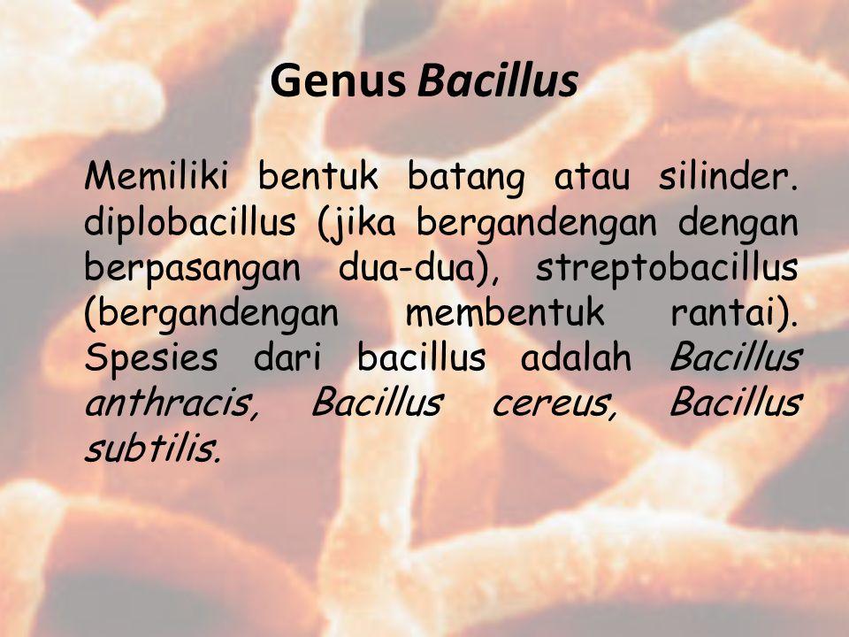 Genus Bacillus Memiliki bentuk batang atau silinder. diplobacillus (jika bergandengan dengan berpasangan dua-dua), streptobacillus (bergandengan membe