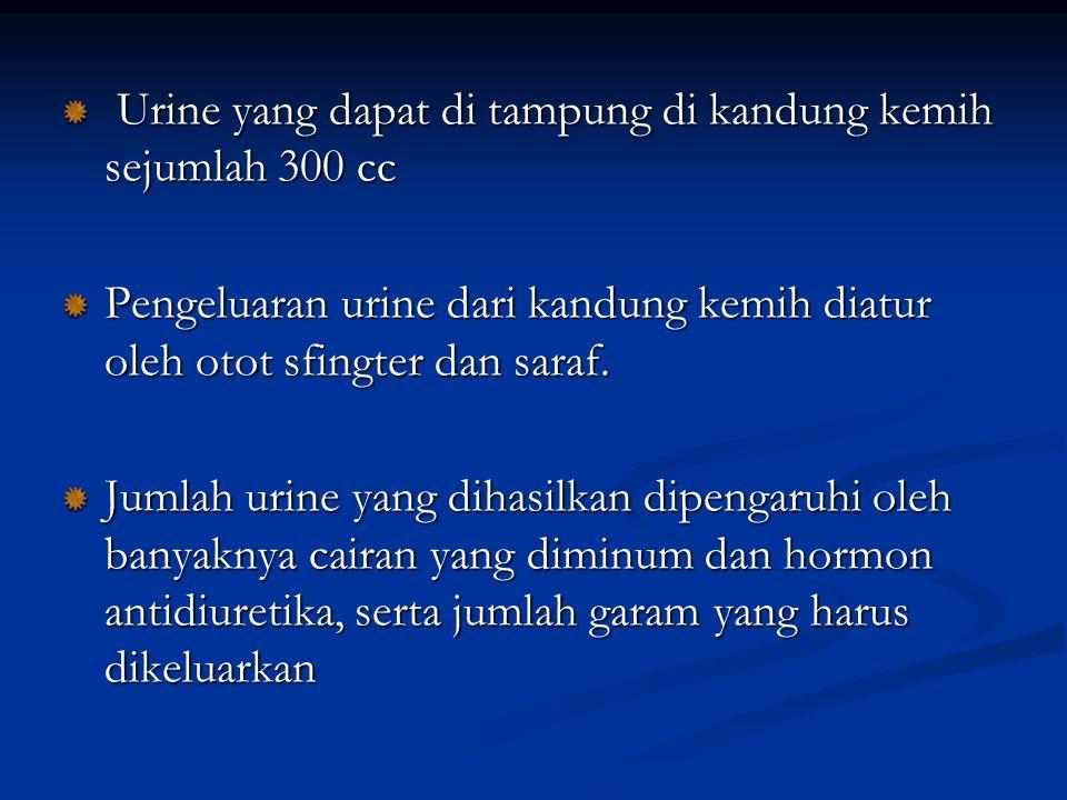 Urine yang dapat di tampung di kandung kemih sejumlah 300 cc Urine yang dapat di tampung di kandung kemih sejumlah 300 cc Pengeluaran urine dari kandu