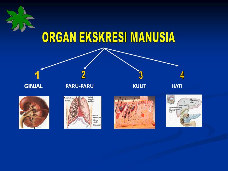 Pembentukan Urin 1.