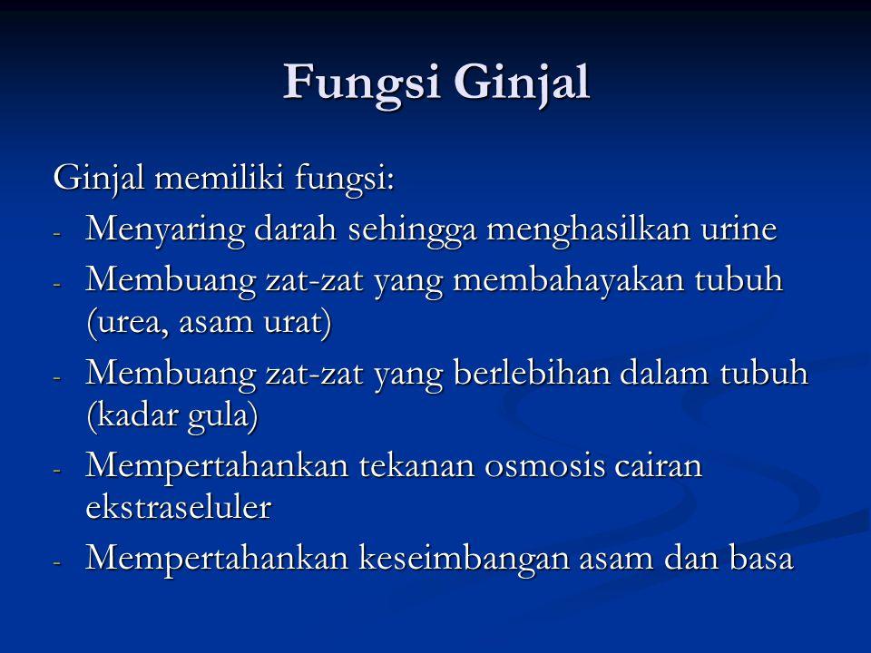 Fungsi Ginjal Ginjal memiliki fungsi: - Menyaring darah sehingga menghasilkan urine - Membuang zat-zat yang membahayakan tubuh (urea, asam urat) - Mem