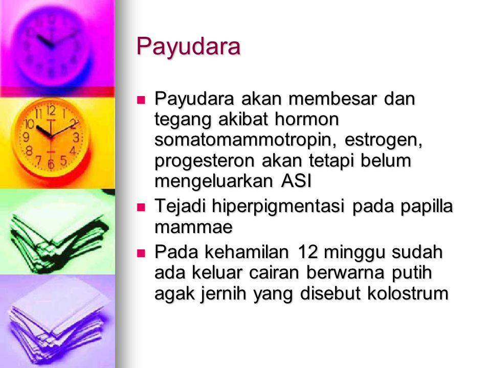 Payudara Payudara akan membesar dan tegang akibat hormon somatomammotropin, estrogen, progesteron akan tetapi belum mengeluarkan ASI Tejadi hiperpigme