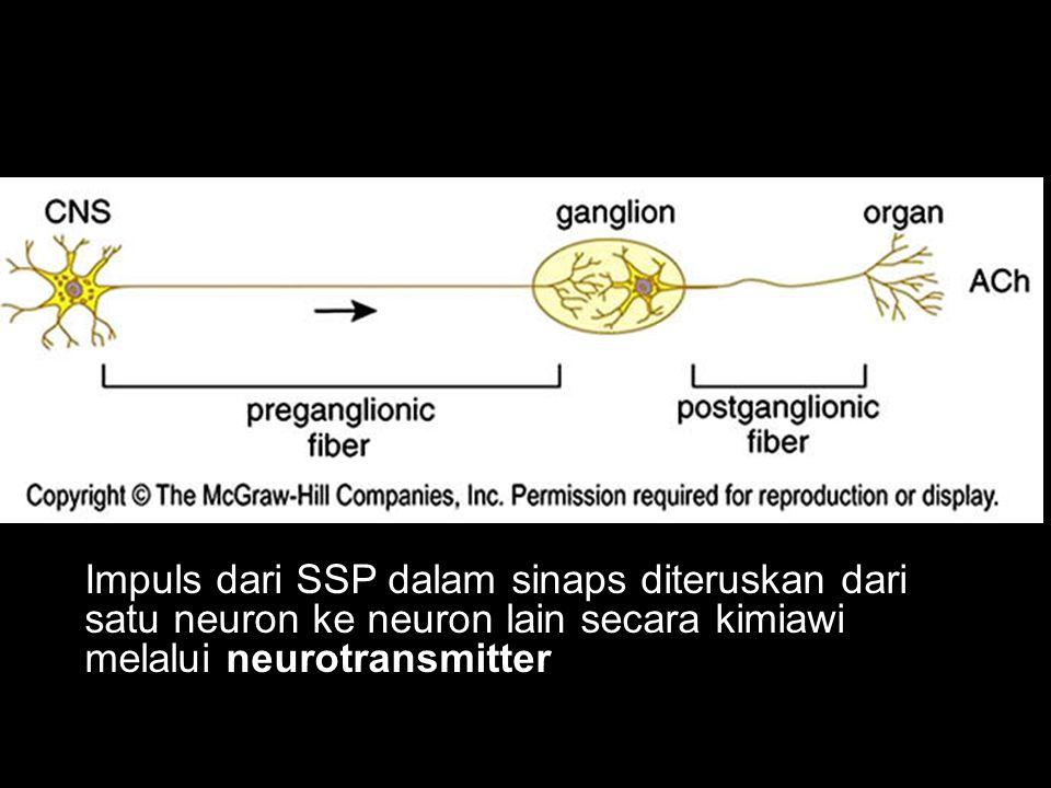 Impuls dari SSP dalam sinaps diteruskan dari satu neuron ke neuron lain secara kimiawi melalui neurotransmitter