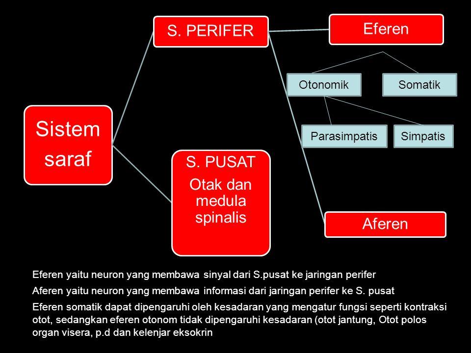 SomatikOtonomik ParasimpatisSimpatis Eferen yaitu neuron yang membawa sinyal dari S.pusat ke jaringan perifer Aferen yaitu neuron yang membawa informa