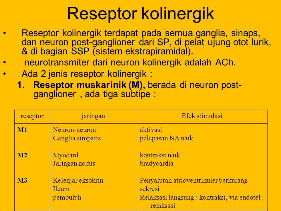 Reseptor kolinergik Reseptor kolinergik terdapat pada semua ganglia, sinaps, dan neuron post-ganglioner dari SP, di pelat ujung otot lurik, & di bagia