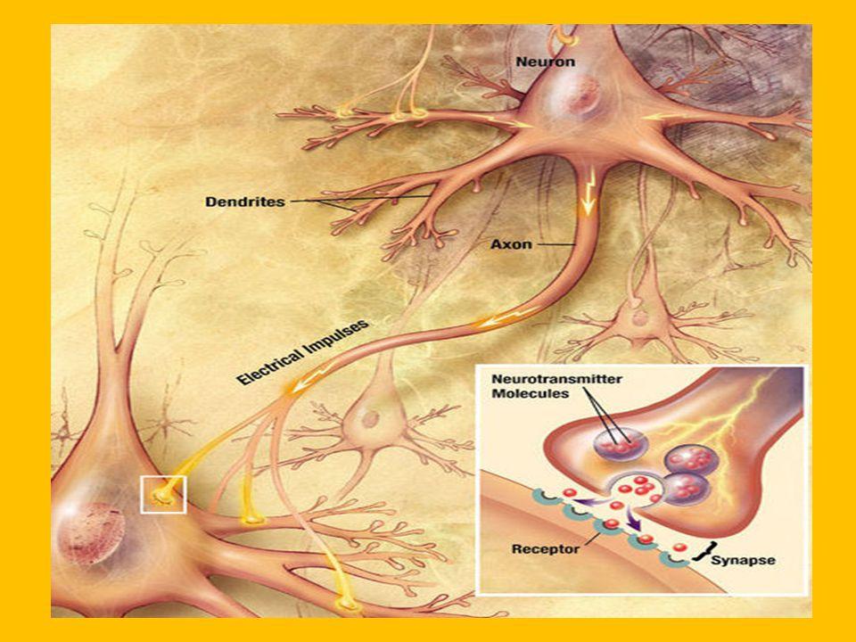 GAMBAR Reseptor Norepinephrine