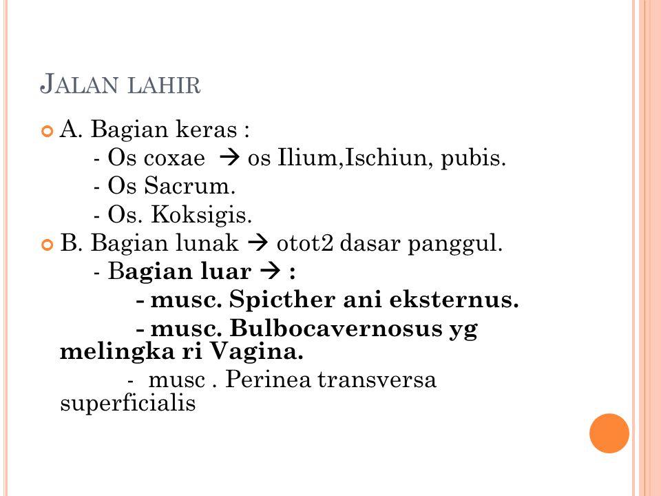J ALAN LAHIR A. Bagian keras : - Os coxae  os Ilium,Ischiun, pubis. - Os Sacrum. - Os. Koksigis. B. Bagian lunak  otot2 dasar panggul. - B agian lua