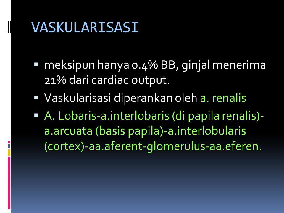 VASKULARISASI  meksipun hanya 0.4% BB, ginjal menerima 21% dari cardiac output.  Vaskularisasi diperankan oleh a. renalis  A. Lobaris-a.interlobari