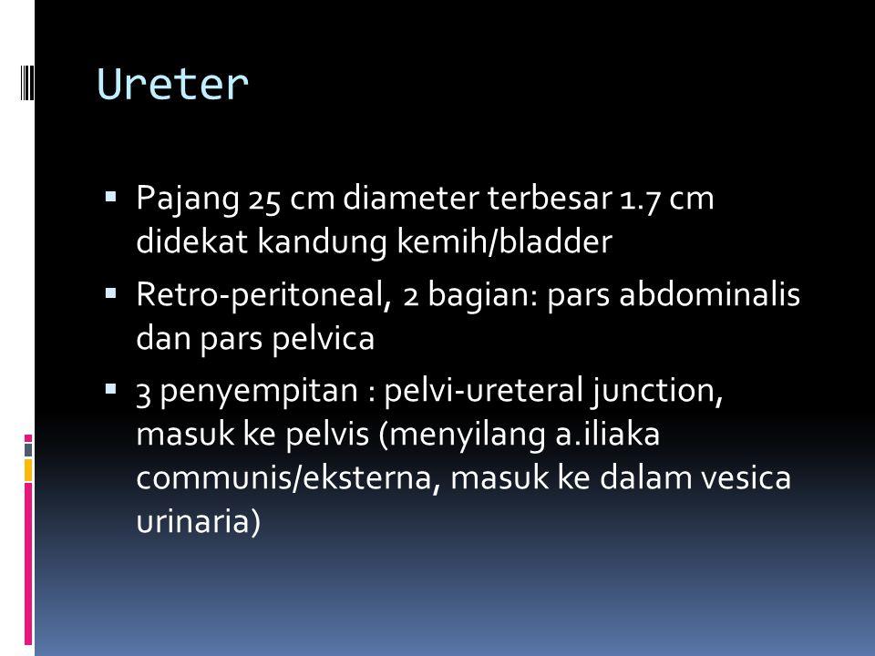 Ureter  Pajang 25 cm diameter terbesar 1.7 cm didekat kandung kemih/bladder  Retro-peritoneal, 2 bagian: pars abdominalis dan pars pelvica  3 penye