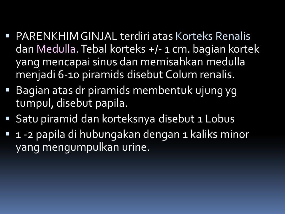  PARENKHIM GINJAL terdiri atas Korteks Renalis dan Medulla. Tebal korteks +/- 1 cm. bagian kortek yang mencapai sinus dan memisahkan medulla menjadi
