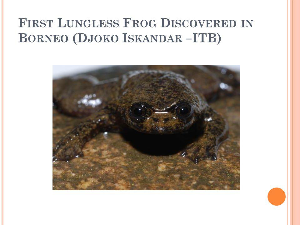 F IRST L UNGLESS F ROG D ISCOVERED IN B ORNEO (D JOKO I SKANDAR –ITB)
