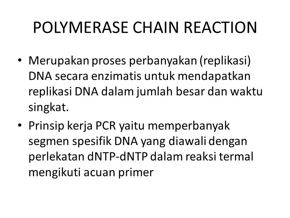 Bahan-bahan untuk PCR Template : DNA, sbg sumber DNA yang akan diperbanyak/diamplifikasi Primer : oligonukleotida, 18 – 30 basa, sbg acuan dalam proses inisiasi dan amplifikasi sekuen DNA DNA polimerase : enzim polimerase (Thermus aquaticus), melakukan perlekatan dNTP menjadi untaian sekuen DNA pada tahap perpanjangan (annealing) dalam polimerisasi DNA dNTP : kumpula basa-basa penyusun DNA