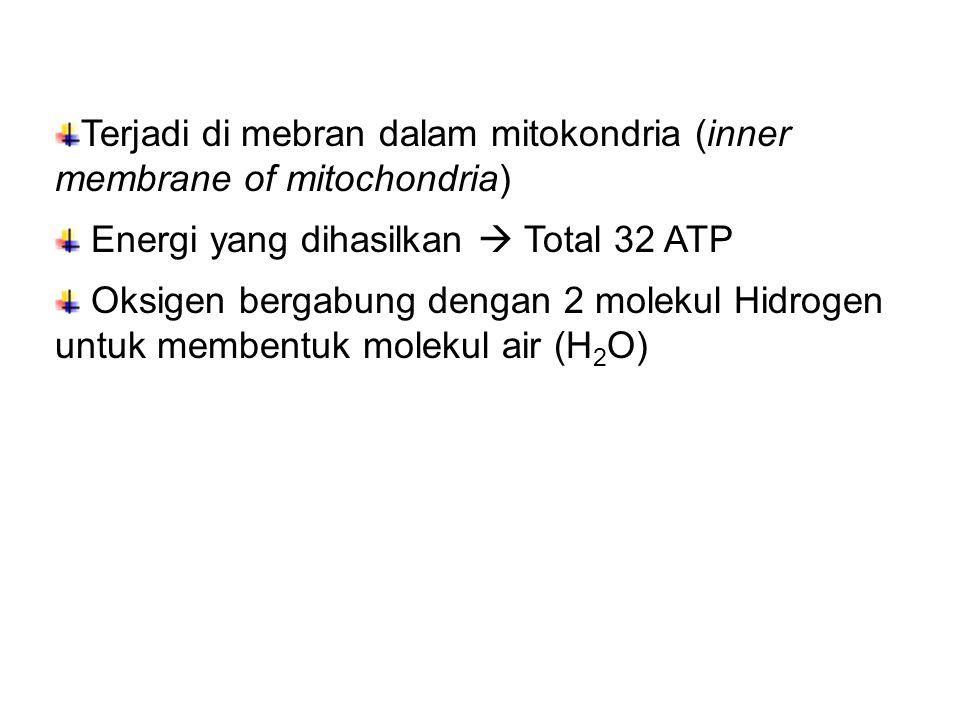 Terjadi di mebran dalam mitokondria (inner membrane of mitochondria) Energi yang dihasilkan  Total 32 ATP Oksigen bergabung dengan 2 molekul Hidrogen