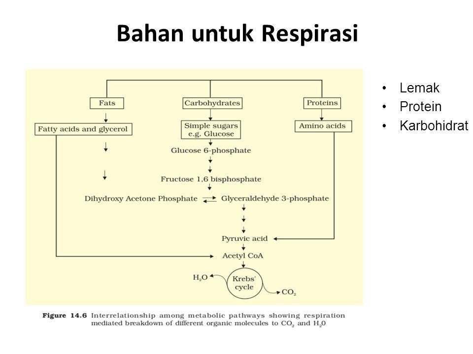 Bahan untuk Respirasi Lemak Protein Karbohidrat