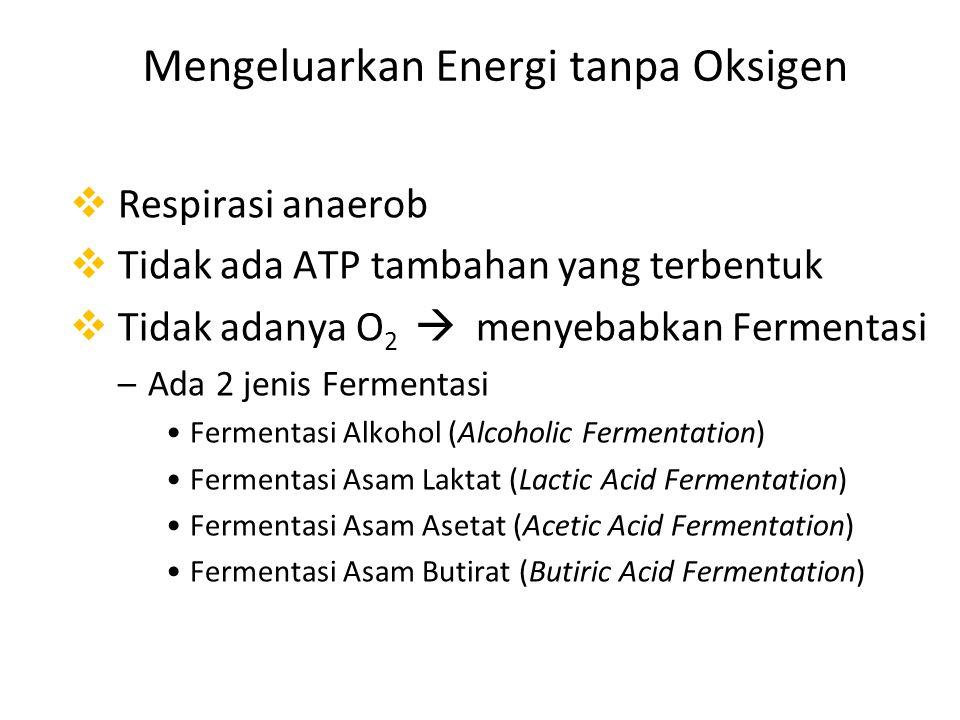 Mengeluarkan Energi tanpa Oksigen  Respirasi anaerob  Tidak ada ATP tambahan yang terbentuk  Tidak adanya O 2  menyebabkan Fermentasi –Ada 2 jenis