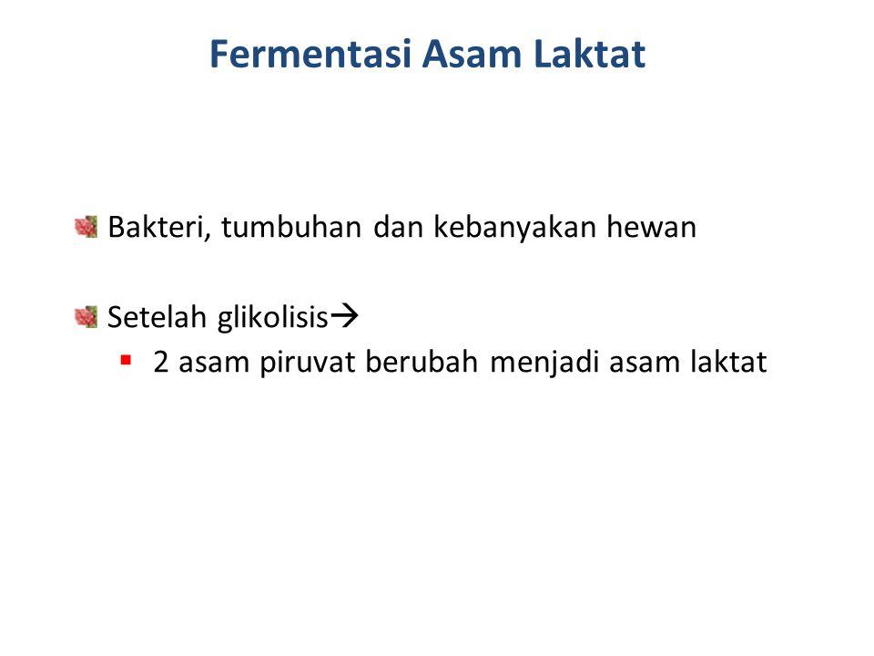 Fermentasi Asam Laktat Bakteri, tumbuhan dan kebanyakan hewan Setelah glikolisis   2 asam piruvat berubah menjadi asam laktat