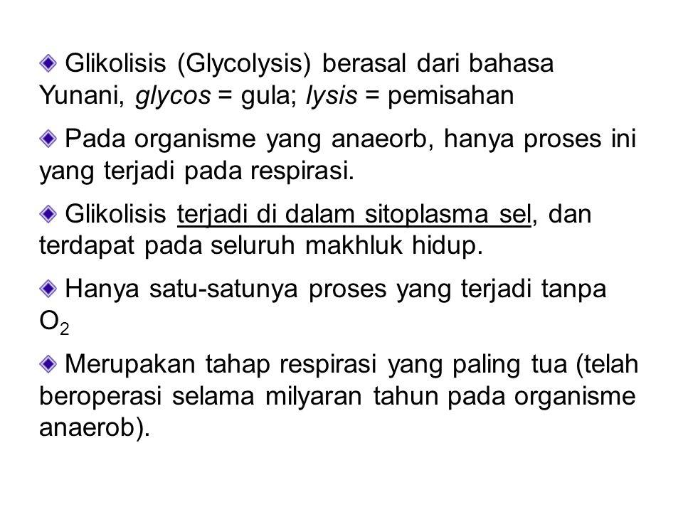 Glikolisis (Glycolysis) berasal dari bahasa Yunani, glycos = gula; lysis = pemisahan Pada organisme yang anaeorb, hanya proses ini yang terjadi pada r