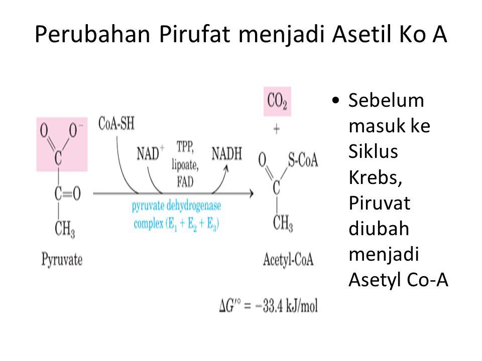 Perubahan Pirufat menjadi Asetil Ko A Sebelum masuk ke Siklus Krebs, Piruvat diubah menjadi Asetyl Co-A