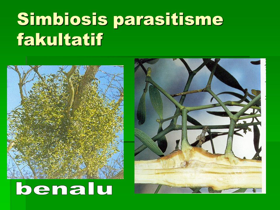 Simbiosis parasitisme fakultatif