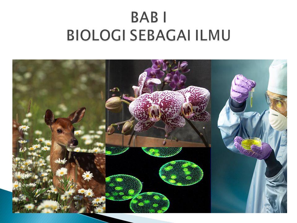 Standar Kompetensi:  Memahami hakikat Biologi sebagai ilmu Kompetensi Dasar:  Mengidentifikasi ruang lingkup Biologi  Mendeskripsikan objek dan permasalahan biologi pada tingkat organisasi kehidupan (molekul, sel, jaringan, organ, individu, populasi, ekosistem dan bioma)