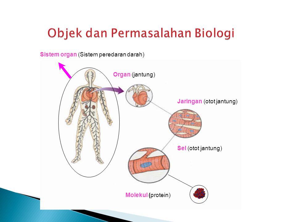 Organ (jantung) Jaringan (otot jantung) Sel (otot jantung) Molekul (protein) Sistem organ (Sistem peredaran darah)