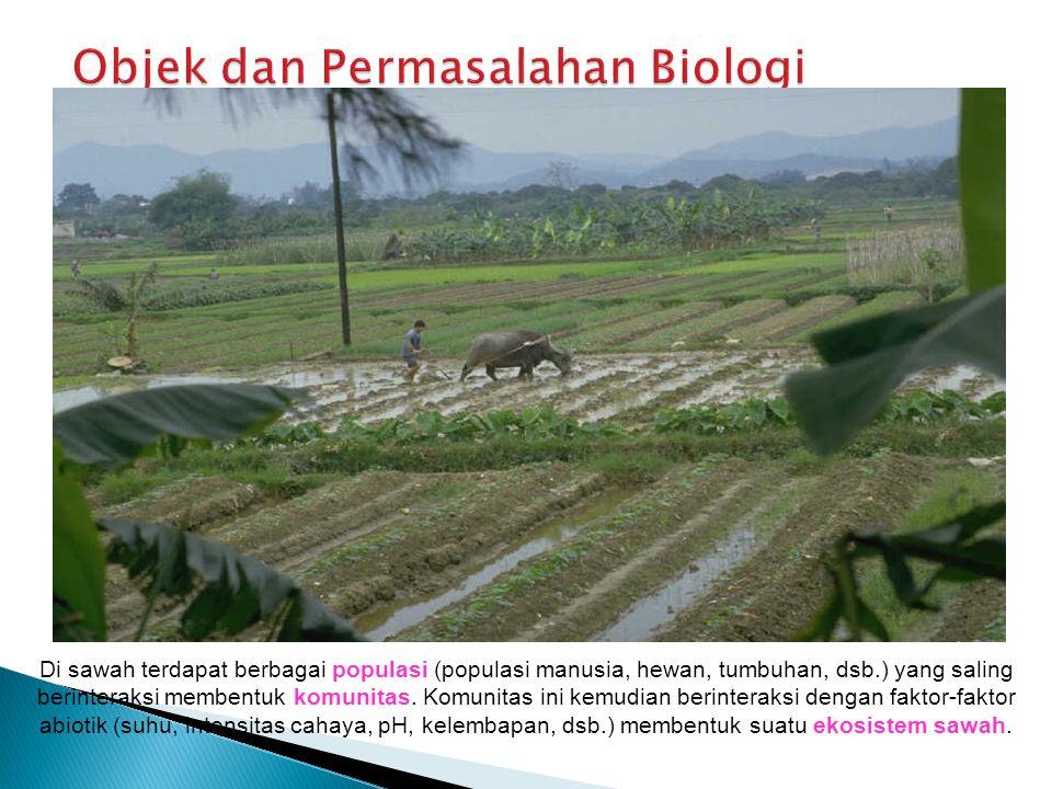 Di sawah terdapat berbagai populasi (populasi manusia, hewan, tumbuhan, dsb.) yang saling berinteraksi membentuk komunitas.