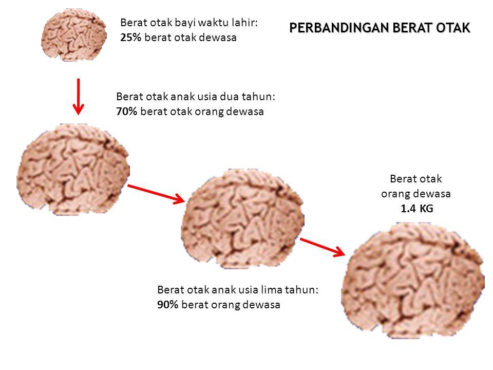 Berat otak bayi waktu lahir: 25% berat otak dewasa Berat otak anak usia dua tahun: 70% berat otak orang dewasa Berat otak anak usia lima tahun: 90% be