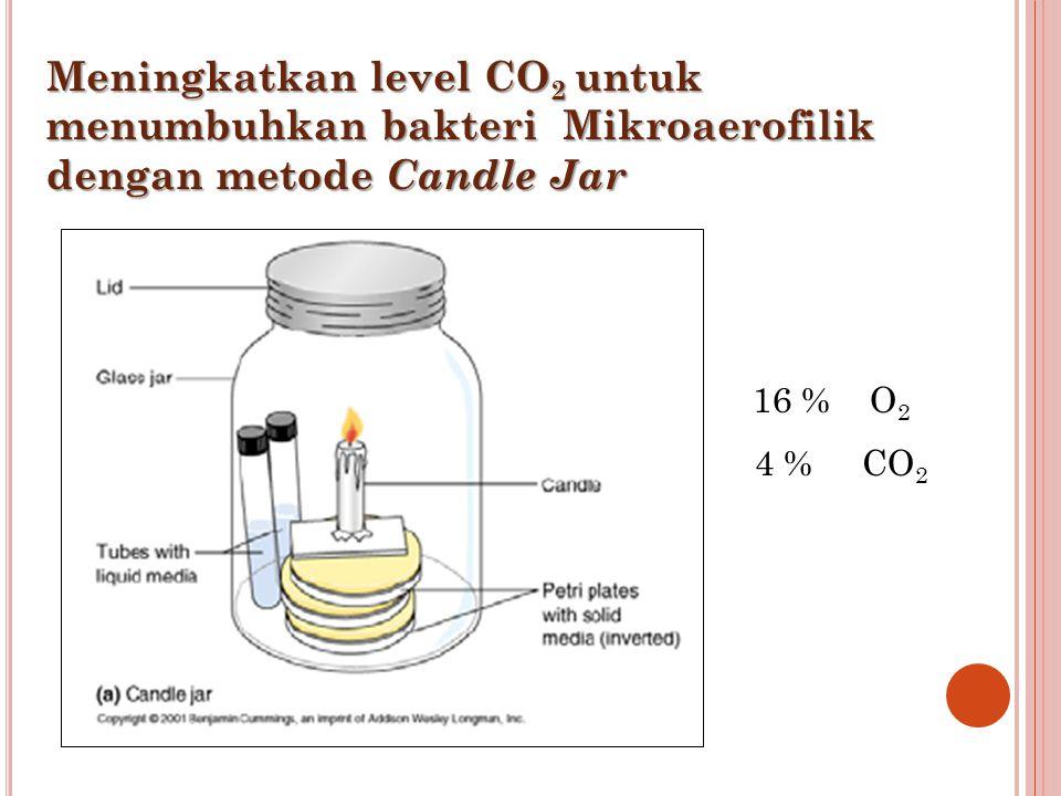 Meningkatkan level CO 2 untuk menumbuhkan bakteri Mikroaerofilik dengan metode Candle Jar 16 % O 2 4 % CO 2