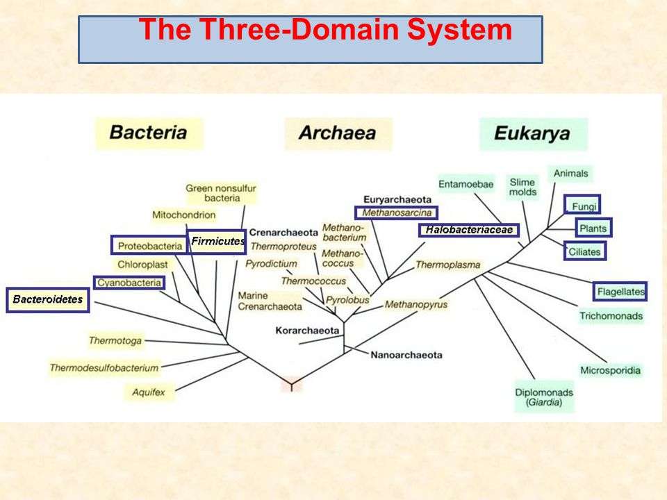 The Three-Domain System
