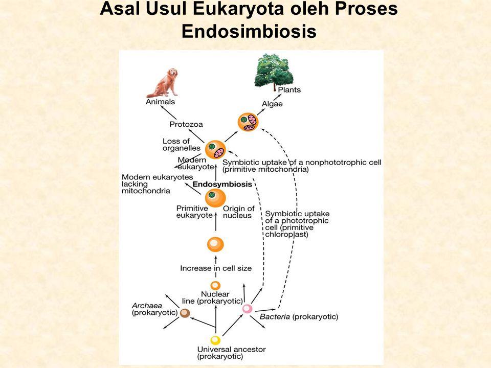Asal Usul Eukaryota oleh Proses Endosimbiosis