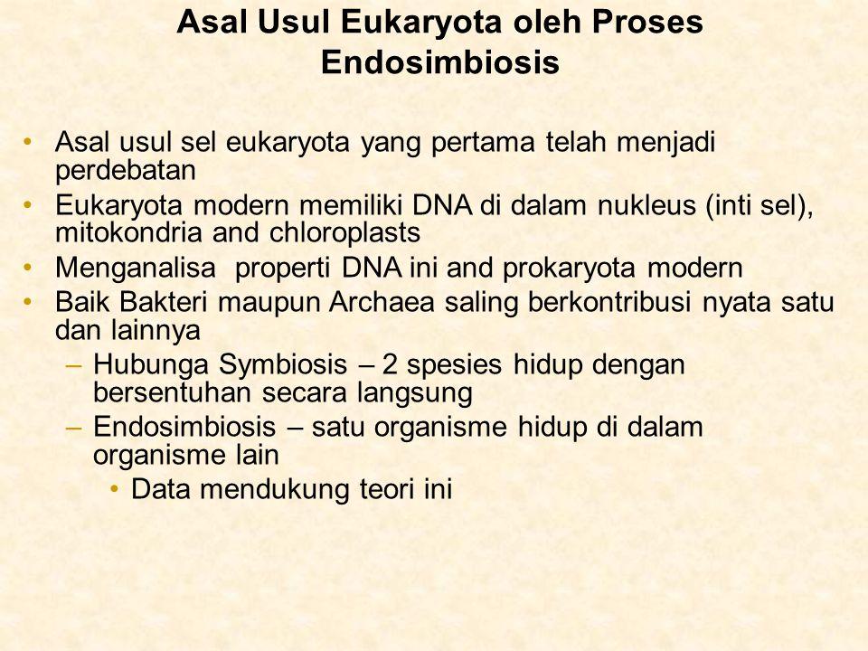 Asal usul sel eukaryota yang pertama telah menjadi perdebatan Eukaryota modern memiliki DNA di dalam nukleus (inti sel), mitokondria and chloroplasts Menganalisa properti DNA ini and prokaryota modern Baik Bakteri maupun Archaea saling berkontribusi nyata satu dan lainnya –Hubunga Symbiosis – 2 spesies hidup dengan bersentuhan secara langsung –Endosimbiosis – satu organisme hidup di dalam organisme lain Data mendukung teori ini