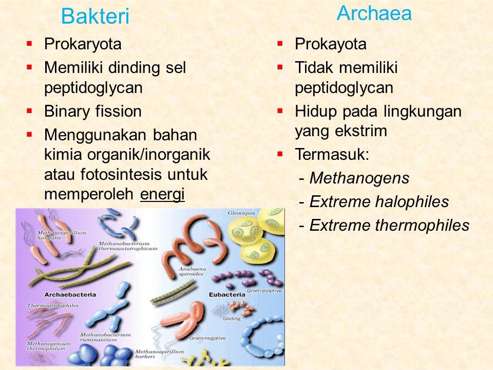 Bakteri Archaea  Prokaryota  Memiliki dinding sel peptidoglycan  Binary fission  Menggunakan bahan kimia organik/inorganik atau fotosintesis untuk memperoleh energi  Prokayota  Tidak memiliki peptidoglycan  Hidup pada lingkungan yang ekstrim  Termasuk: - Methanogens - Extreme halophiles - Extreme thermophiles