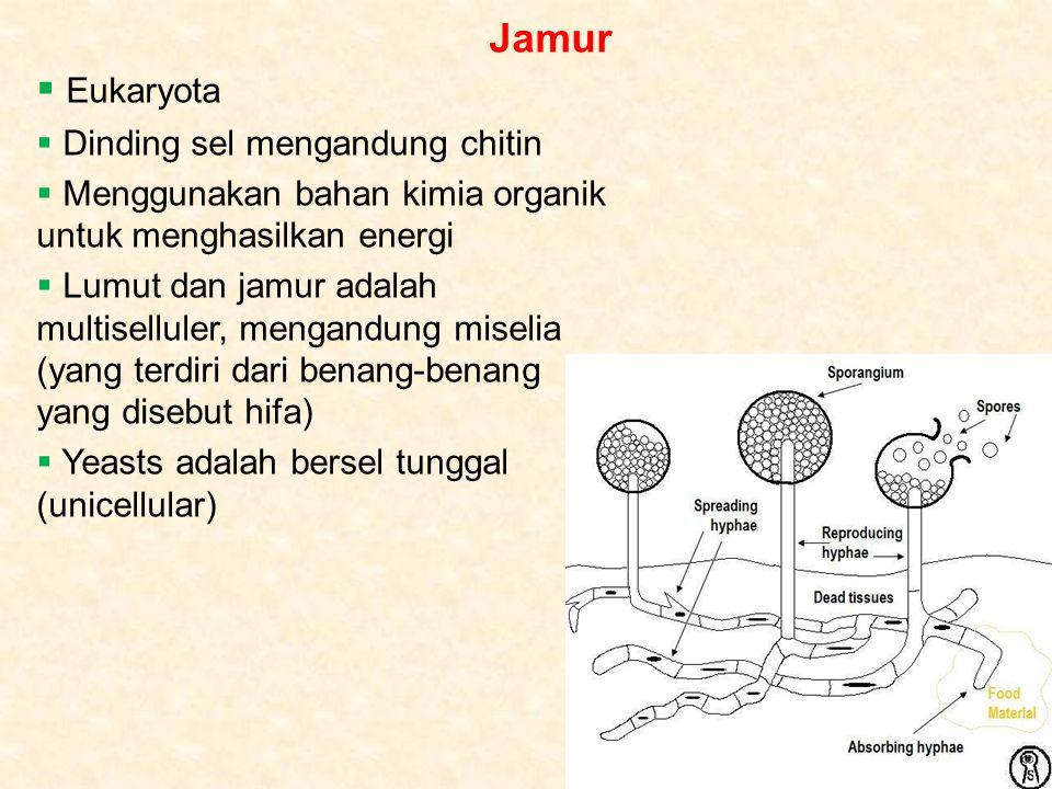 Jamur  Eukaryota  Dinding sel mengandung chitin  Menggunakan bahan kimia organik untuk menghasilkan energi  Lumut dan jamur adalah multiselluler, mengandung miselia (yang terdiri dari benang-benang yang disebut hifa)  Yeasts adalah bersel tunggal (unicellular)