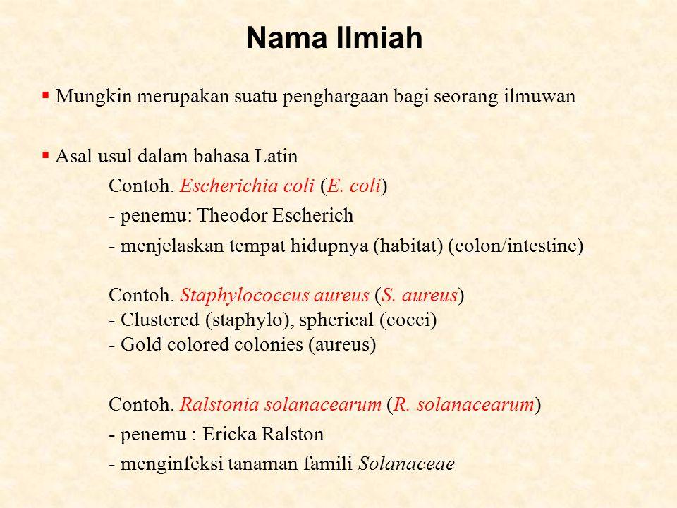 Nama Ilmiah  Mungkin merupakan suatu penghargaan bagi seorang ilmuwan  Asal usul dalam bahasa Latin Contoh.