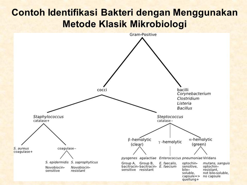 Contoh Identifikasi Bakteri dengan Menggunakan Metode Klasik Mikrobiologi