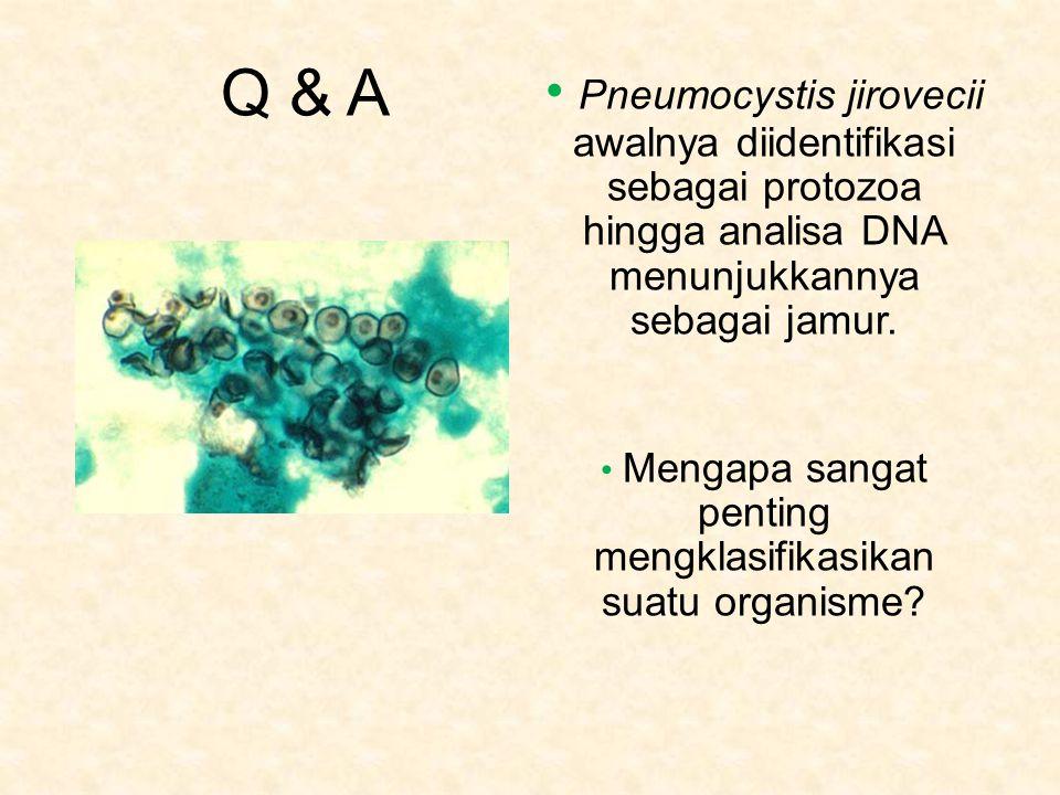 Q & A Pneumocystis jirovecii awalnya diidentifikasi sebagai protozoa hingga analisa DNA menunjukkannya sebagai jamur.