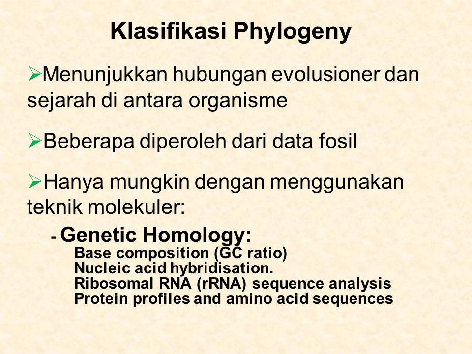 Klasifikasi Phylogeny  Menunjukkan hubungan evolusioner dan sejarah di antara organisme  Beberapa diperoleh dari data fosil  Hanya mungkin dengan menggunakan teknik molekuler: - Genetic Homology: Base composition (GC ratio) Nucleic acid hybridisation.